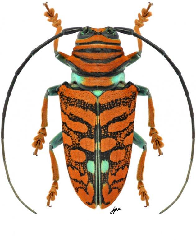 Sternotomis chrysopras